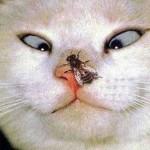 gatomosca